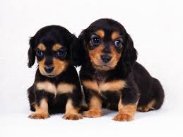 best pet shops in Pune