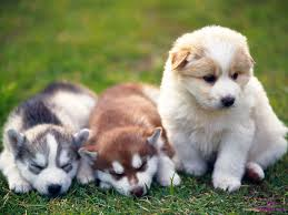 best pet shops in pune
